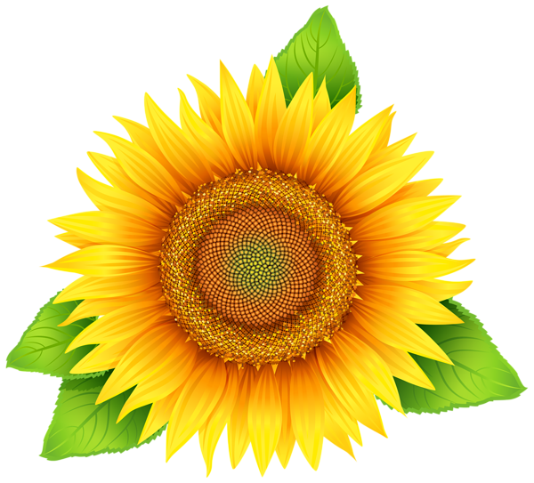 Sunflower_PNG_Clipart_Image
