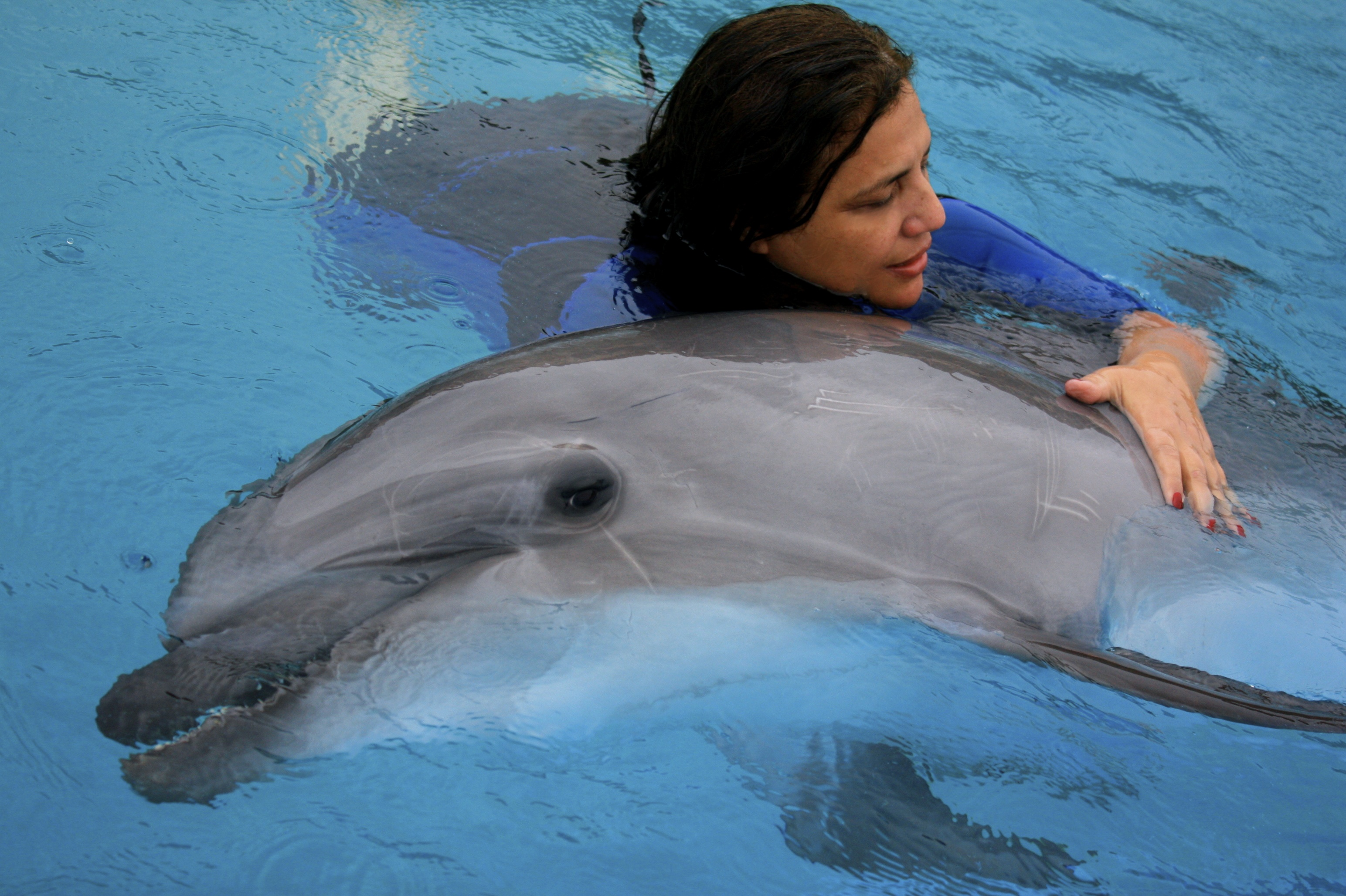 dolphinhealing